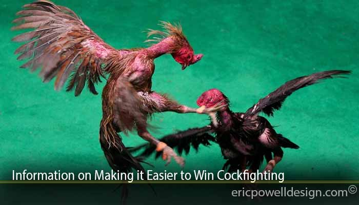 Information on Making it Easier to Win Cockfighting